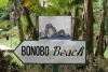 Bonobo beach