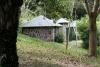 Bonobo baby centre