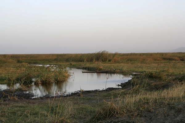 Marshes around Lake Ziway (Ethiopia) at dusk