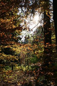 Autumn on the Baraque Fraiture