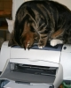 Our little tiger prowling on the printer head